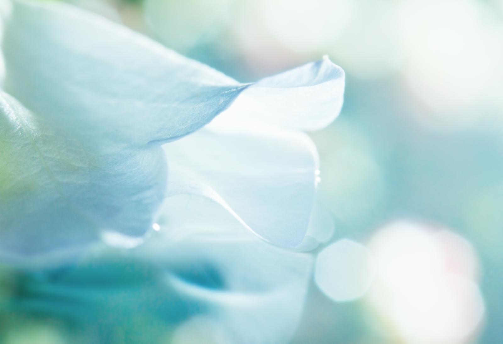 flower-background-1